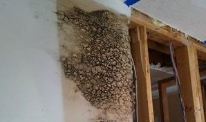 Mold Infestation In Commercial Building
